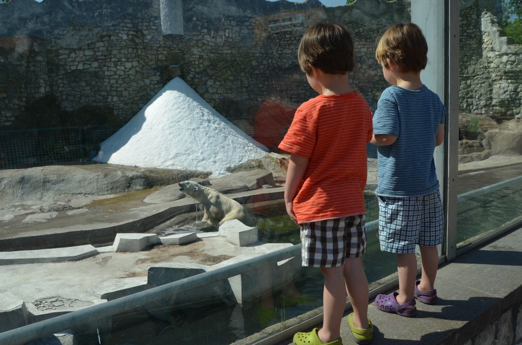 Twins looking at an exhibit at the zoo
